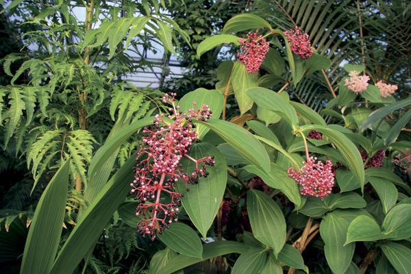 Praktické rady do vašej zimnej záhrady