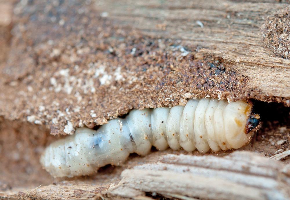 Impregnácia dreva proti škodcom? Rozhodne áno!