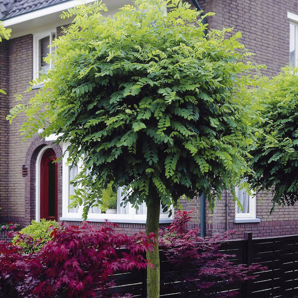 10 najkrajších stromov, ktoré vám v záhrade vytvoria tieň