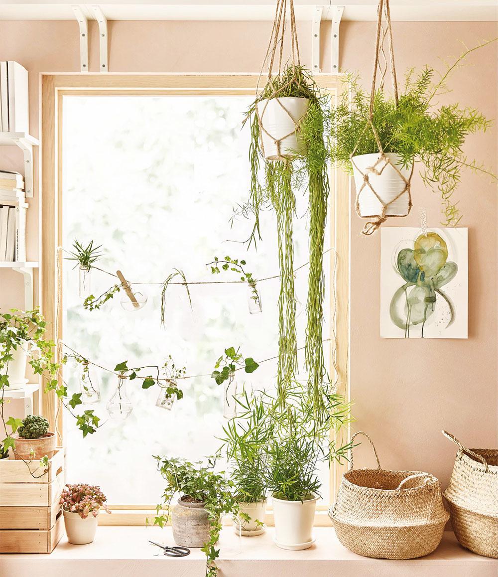 Živé ozdoby. Rastliny vnesú do každého interiéru farbu ajas, navyše vám vylepšia vzduch. Stačí sa one trochu starať amôžu vám robiť väčšiu radosť ako farebný nábytok, ktorý by ste po pár rokoch vymenili.