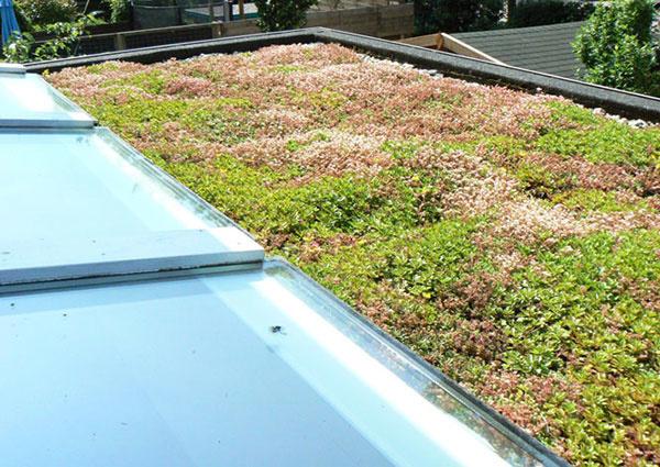 6 dôvodov, prečo sú rozchodníky na zelenú strechu najlepšie