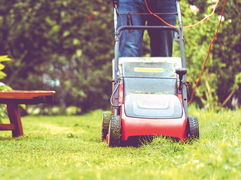 Ako dosiahnuť, aby sme mali zelený trávnik po celý rok