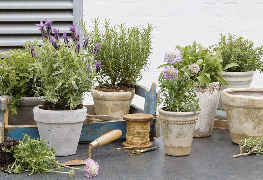 Voňavé aužitočné. Vysaďte si zopár byliniek – okrem príjemnej vône sa postarajú aj oodháňanie nepríjemného hmyzu. A,samozrejme, tiež opestrejšiu kuchyňu.