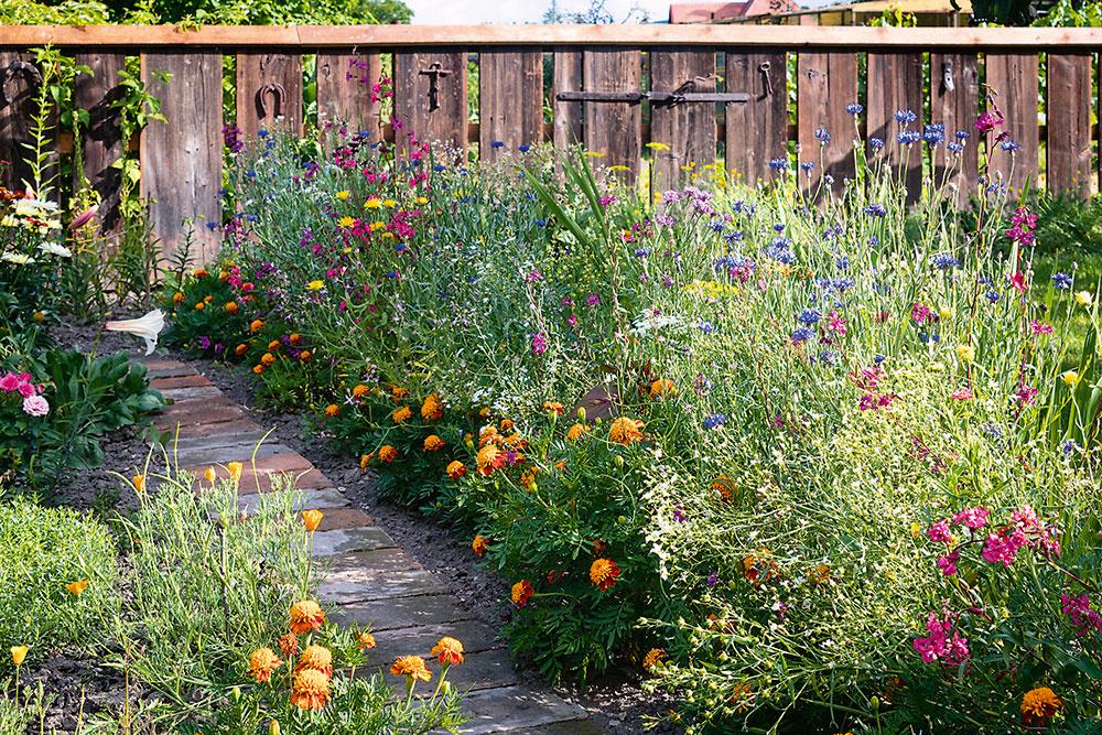 Okrasného trávnika tu veľa nie je. Tento rok zasiala domáca pani aj lúčnu zmes, do ktorej primiešala ivlastné odložené semienka. Kvety chce nechať voľne rásť, navysoko, aby mohli včielky zbierať peľ.