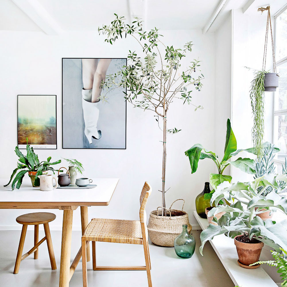 rastliny na oknách