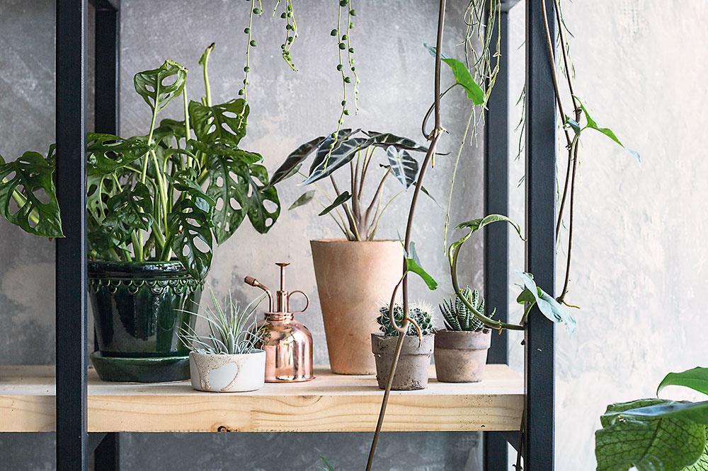 Obrie fikusy, paprade, monstery: Ako si doma vytvoriť pravú mestskú džungľu