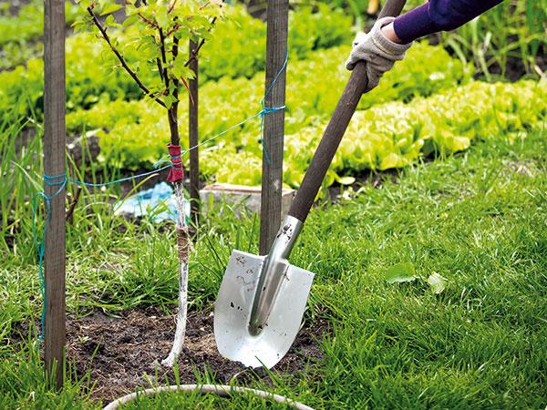 10 TOP ovocných odrôd, ktoré sa v našich záhradách osvedčili