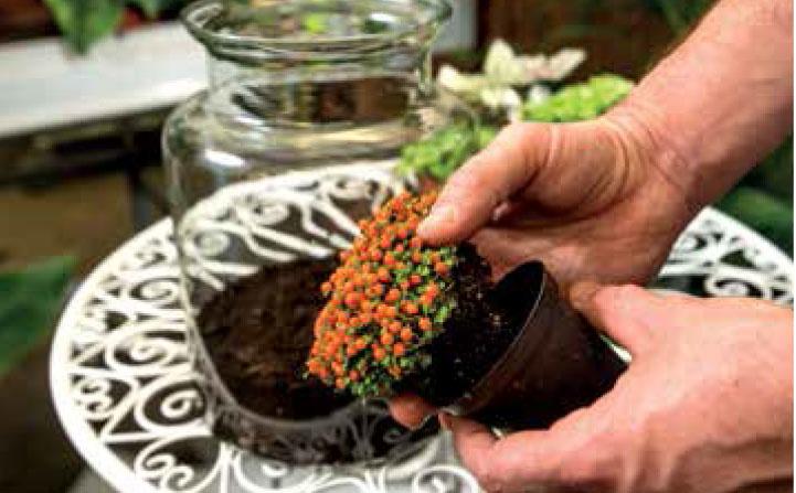 RASTLINY: Do jednej nádoby vysadíme primerané množstvo pohľadovo príťažlivých rastlín pôvodom z trópov, ktoré obľubujú vyššiu vlhkosť vzduchu.
