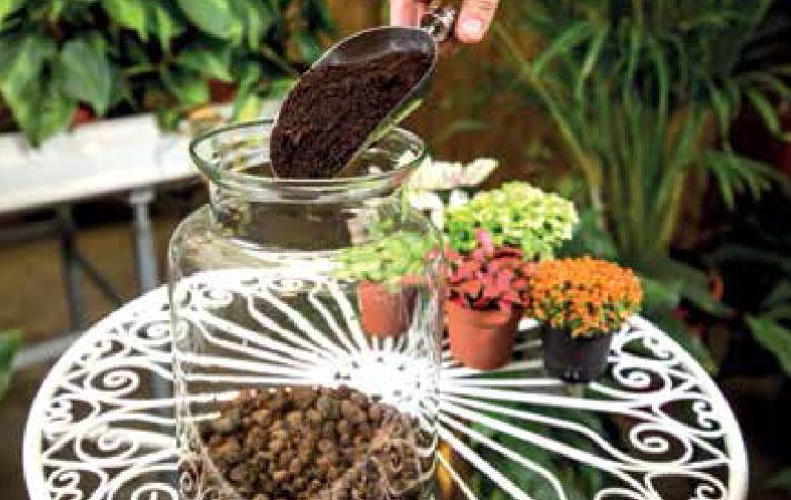 SUBSTRÁT: Na drenáž nasypeme tenkú vrstvu dreveného uhlia a na ňu pestovateľský substrát, ideálne rašelinový, čerstvý a mierne vlhký.