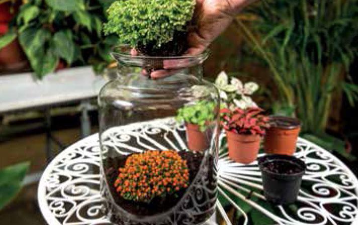 VÝSADBA: Rastliny vysadíme s kompaktným koreňovým balom do pripravených jamiek. Neprekáža, ak sa bal poruší, korene sa rýchlo zakorenia.