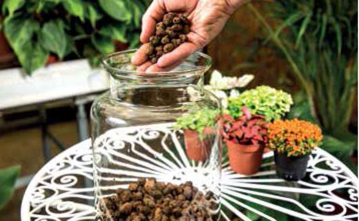 DRENÁŽ: Na dno sklenenej nádoby dáme asi 5 cm vysokú vrstvu riečneho štrku či keramzitu. Pri menších nádobách môže byť vrstva menšia.
