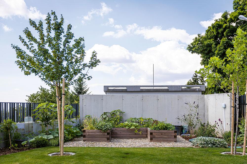 Záhradu zverila majiteľka do rúk záhradnej architektky, ktorá vybrala hneď niekoľko stromov, aby na pozemok vrhali žiaduci tieň. Je to najmä javor, hrab obyčajný a ľaliovník tulipánokvetý. Majiteľka si k nim ešte pridala oskorušu, ktorá sa jej hneď v prvý rok odvďačila bohatou úrodou.