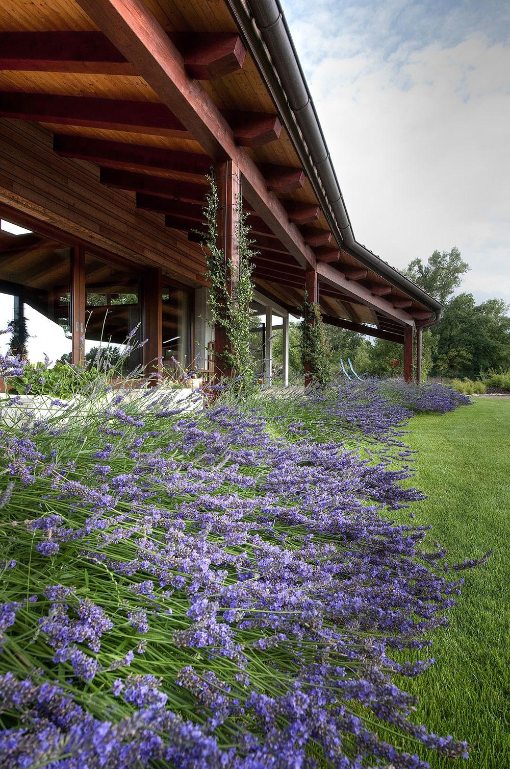 lúčne kvety pred terasou domu