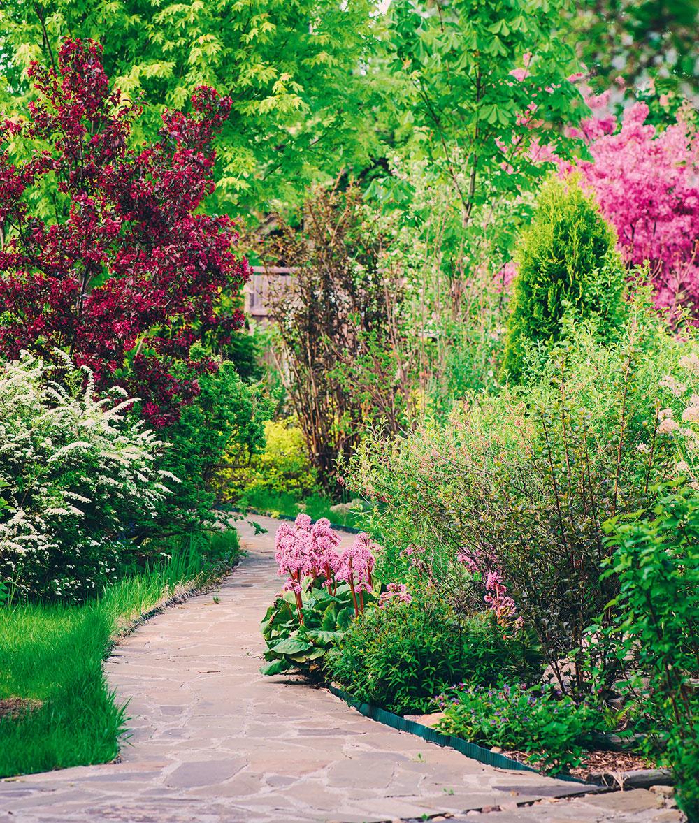 Aby záhon lahodil oku po celý rok, treba si premyslieť jeho kompozíciu azvoliť správne druhy rastlín. Nemali by na ňom chýbať kostrové dreviny, teda stromy akry, ktoré tvoria hlavnú kompozíciu. Vždyzelené kry sú zväčša farebne nenápadné, ale na záhone plnia dôležitú úlohu – tvoria pozadie kvitnúcim cibuľovinám alebo trvalkám azabezpečujú zelenú hmotu aštruktúru vzáhrade aj počas dlhej zimy.