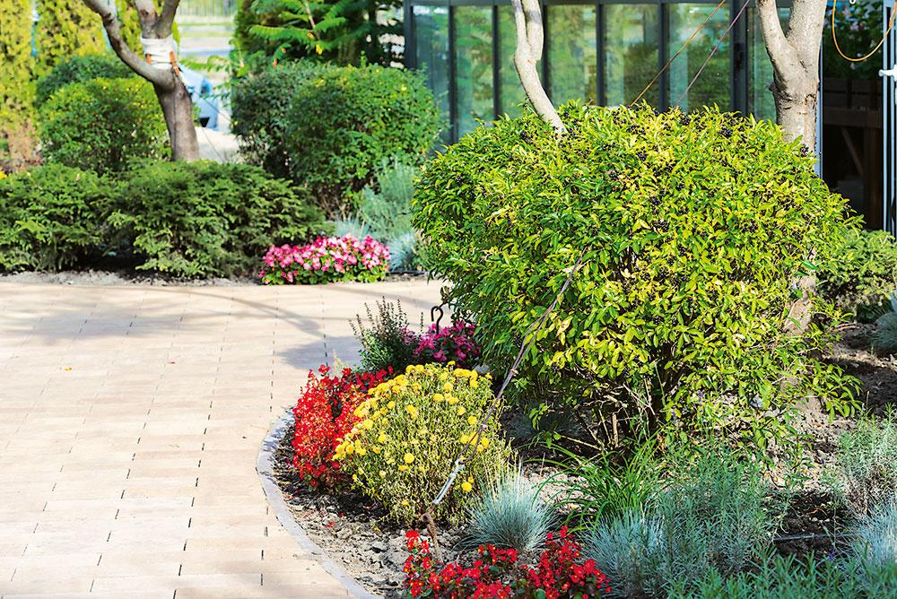 Stromy spolu so vždyzelenými a opadavými krami tvoria kostru záhradnej kompozície po celý rok. Záhon môžete rozdeliť na vysokú, stredne vysokú a nízku časť. Stromy, kry a trvalky vysádzajte do zadných partií, nižšie druhy rastlín majú miesto vpredu na leme záhona.
