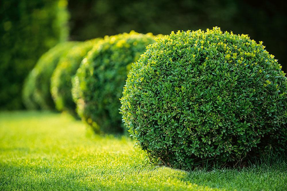 V modernej záhrade vyniknú vždyzelené tvarovateľné dreviny (napríklad krušpán), vďaka ktorým bude záhrada pôsobivá aj v zime. Môžu byť vysadené jednotlivo a tvarované do ľubovoľnej podoby, často sa využívajú aj ako živý plot, ktorý môže lemovať záhony.