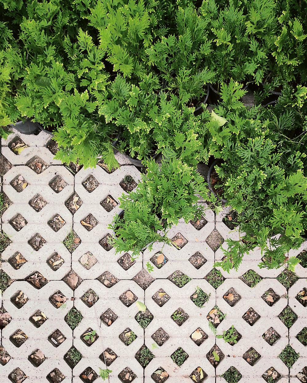 Pri výbere betónového podkladu máte viacero možností, jednou znajekologickejších je použitie zatrávňovacích tvárnic. Sú nielen výborným podkladom pre parkovací priestor, ale vytvoríte nimi ioniečo zelenší záhradný chodník. Zatrávňovacie tvárnice nájdete na www.hornbach.sk
