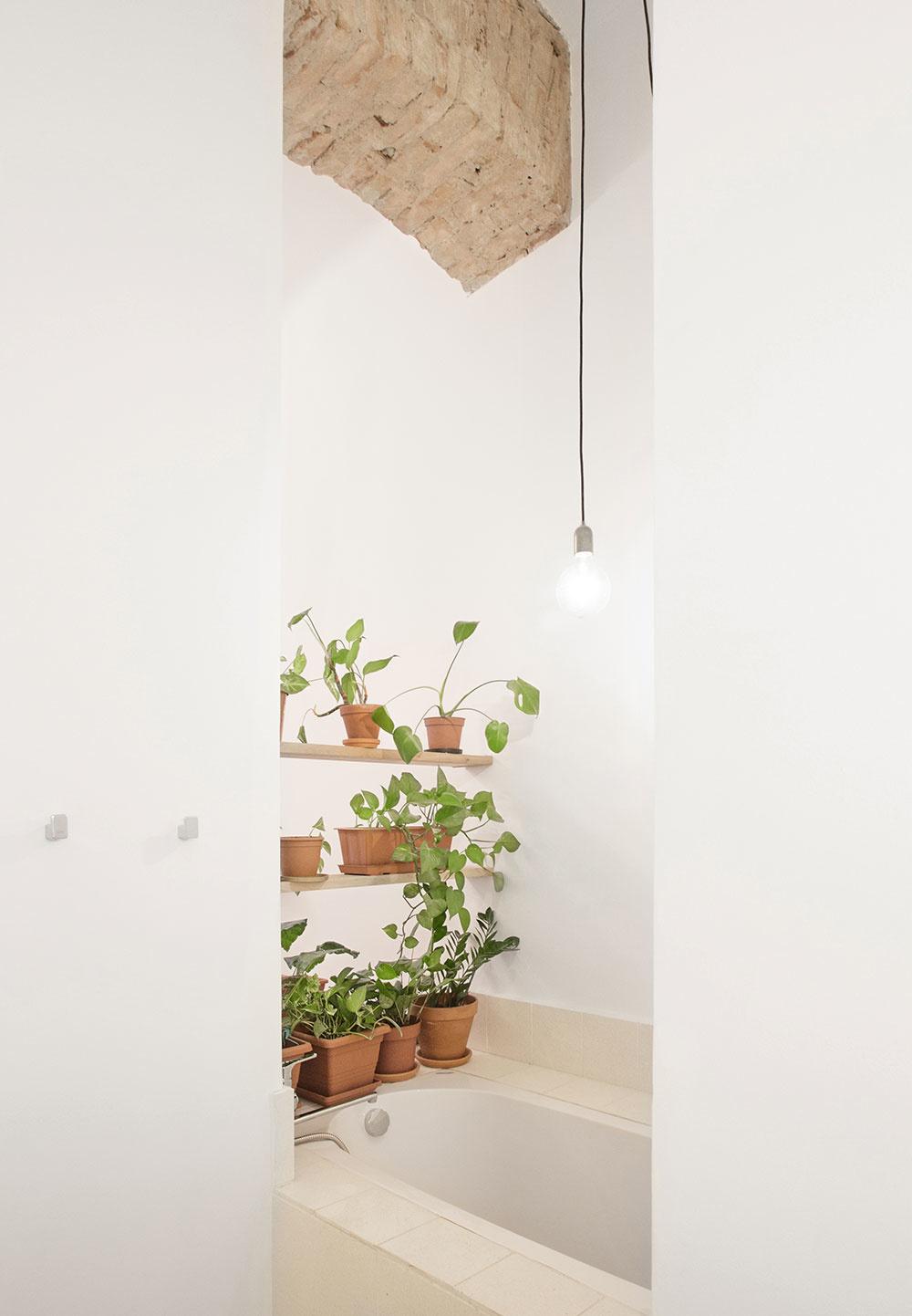 zelená stena s rastlinami