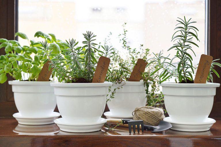 Čerstvé bylinky vo vlastnom byte po celý rok