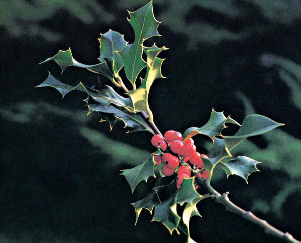 December v záhrade 2