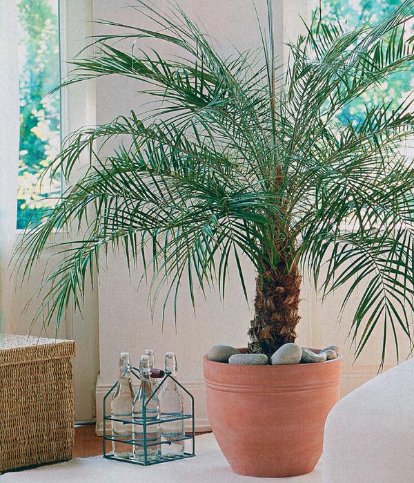 Rastliny ako dominanty