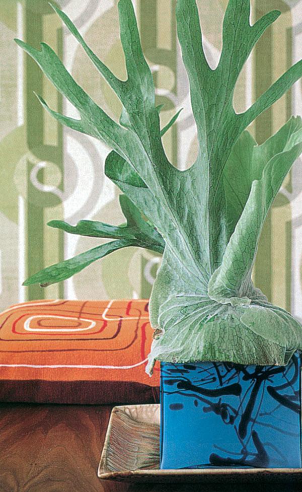 Rastliny s architektonickým efektom 1