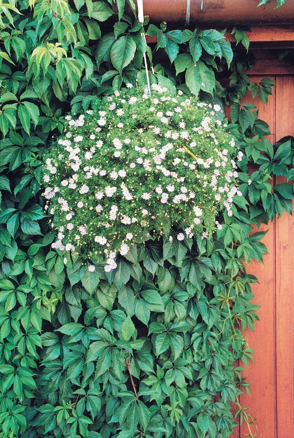 Rastliny s architektonickým efektom 2