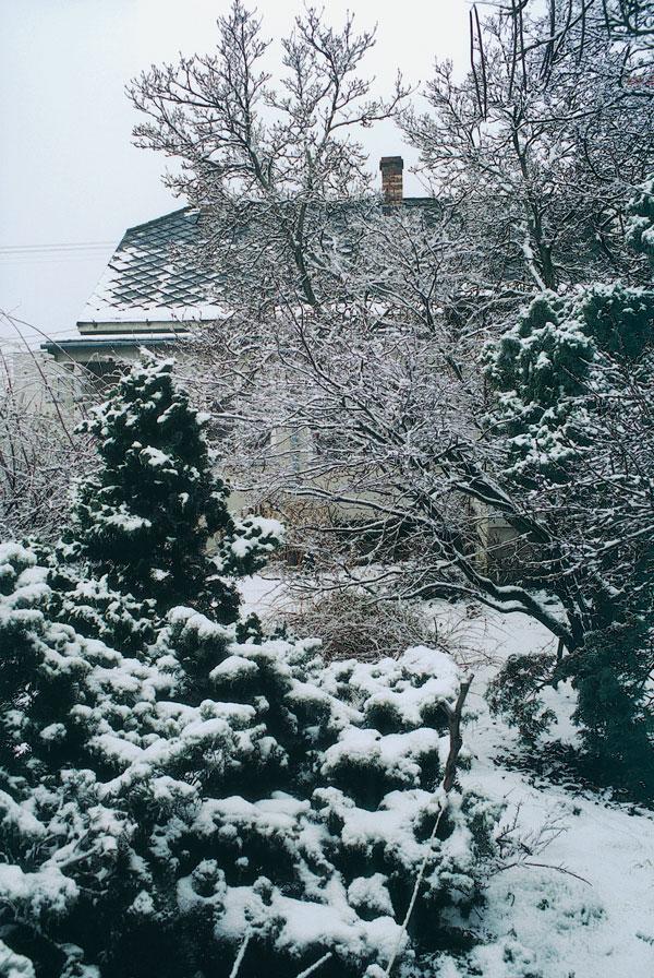 V kráľovstve snežienok