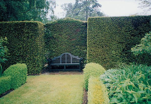 Starostlivosť o živý plot a kríky