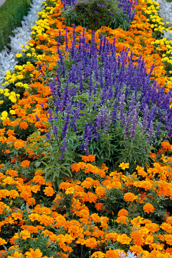 Záhrada za pár drobných