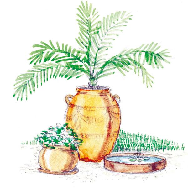 Rastlina anádoba – ako ačo kombinovať