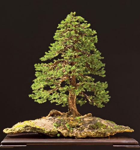 Malé obrazy veľkých stromov