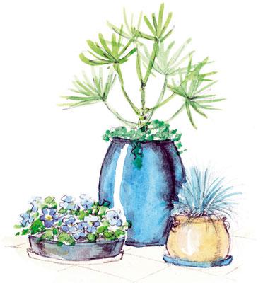 Do akých nádob zasadiť rastliny?