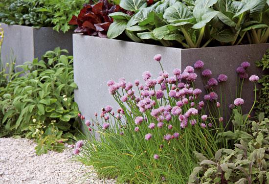 O záhrade počítajúcej každý centimeter