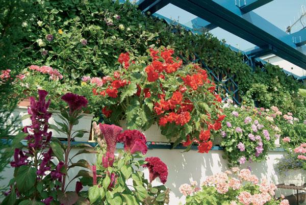 Rajská záhrada na desiatom poschodí