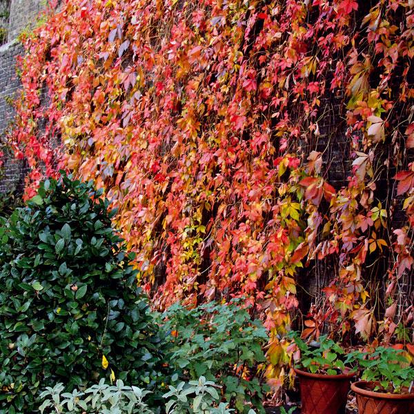 November v záhrade