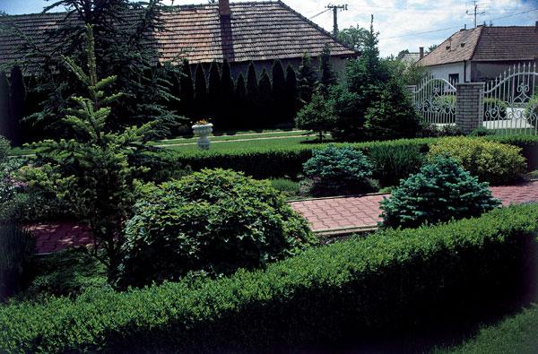 Rok v záhrade