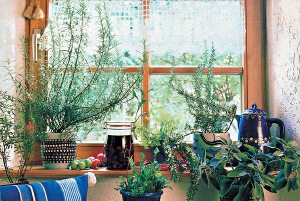 Zeleň v oknách