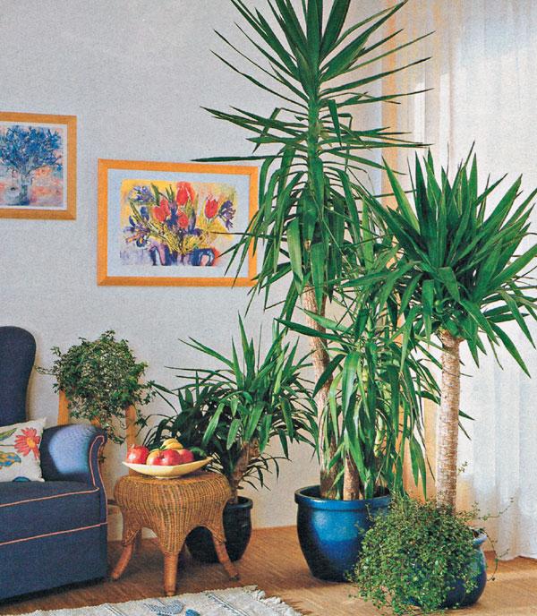 Nebezpečná zeleň v byte