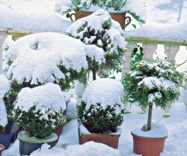 December v záhrade