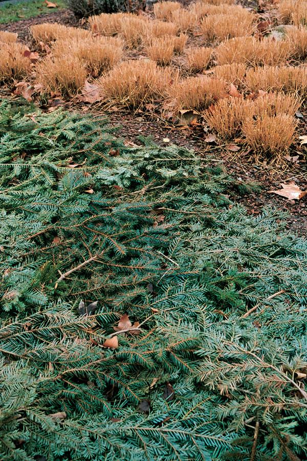 December v záhrade 3