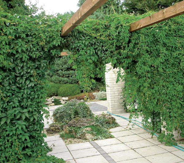 Základy záhradnej kompozície