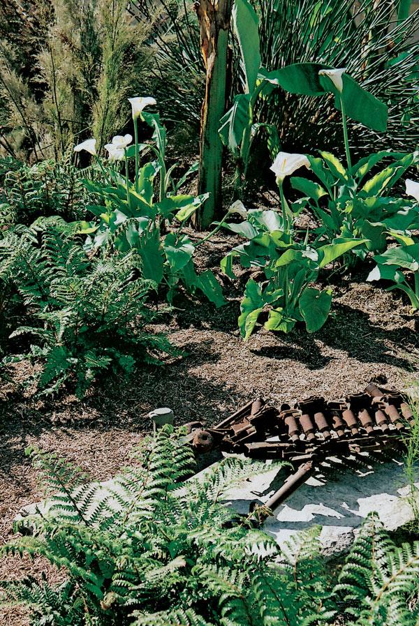 Záhrada na exotický spôsob alebo Afrika pri dome