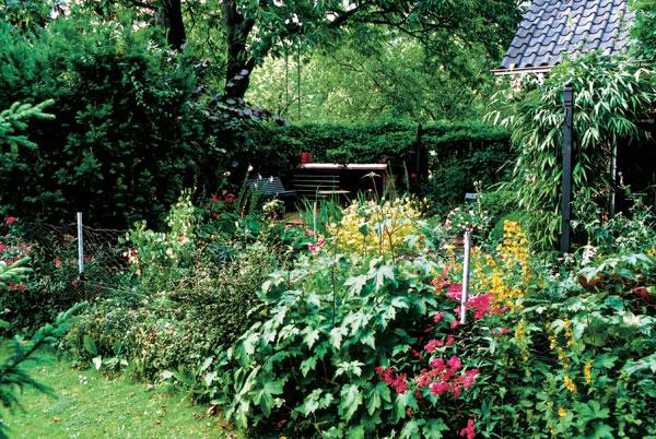 Záhrada v tieni alebo ako sa žaba premenila na princa