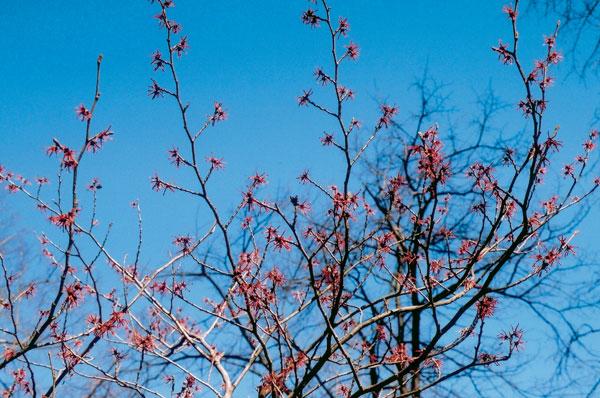 Kvety zimy