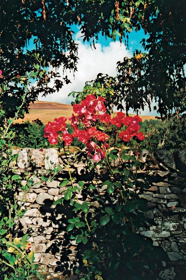 """Záhrada v """"kamennej zemi"""": Farebné potešenie v škótskom pohraničí"""