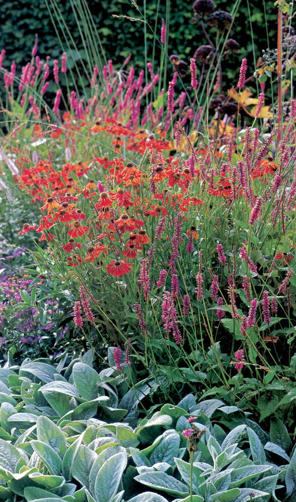 Záhrada pre začiatočníkov, alebo rozohrajte vašu záhradu farbami