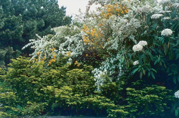 Pôsobenie vegetácie v priestore a čase