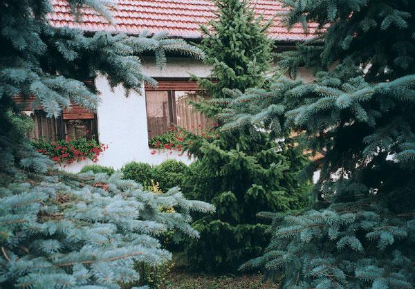Dreviny v záhrade (1. časť – Stromy)