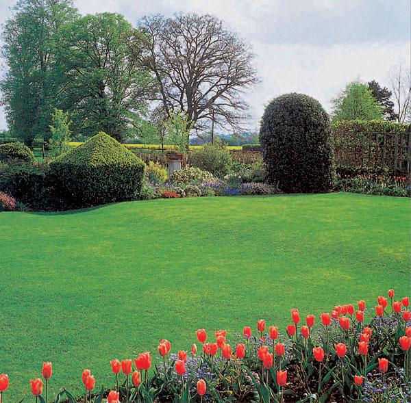 Ako vypestovať pekný zelený koberec (1. časť – Príprava)